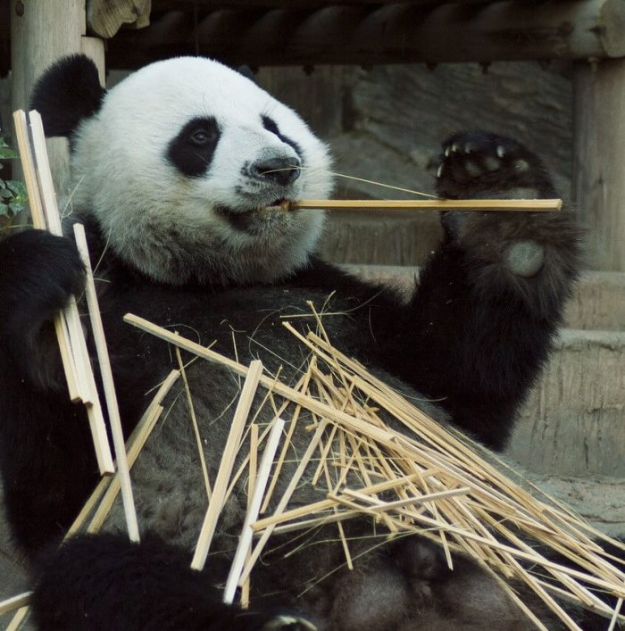 panda google update image