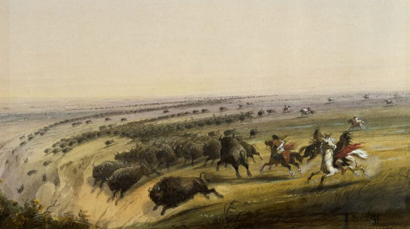 buffalo stampede to illustrate the concept of a stampede to amp pages